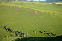 呼伦贝尔绿色的草地