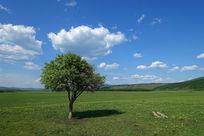 蓝天下的小树