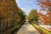 秋天的林间小路
