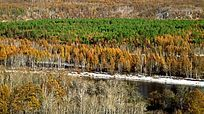 森林河流之秋