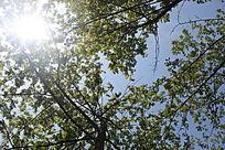 阳光与树林