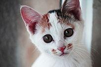 白色猫咪头部特写