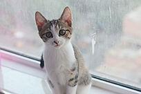 静态的条纹猫咪