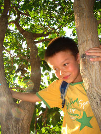 在树上开心笑的孩子