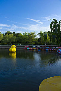 中山公园的大黄鸭