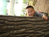 抱着树开心的笑