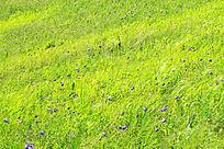 草甸风中的草丛