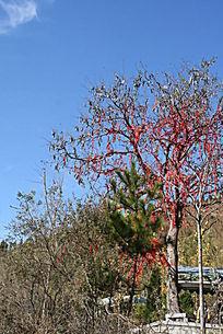 挂满红绳的许愿树