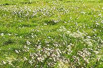 田野风中的草丛
