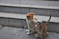 大猫打小猫