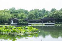 杭州西湖荷塘荷叶园林建筑园林景观