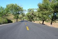 绿色森林中的公路