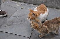 瞄准猎物的猫咪