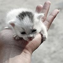手掌上的小猫