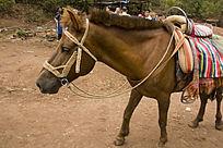 茶马古道马匹
