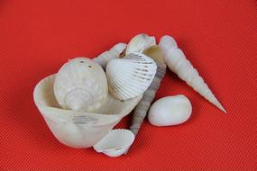 漂亮的贝壳和海螺