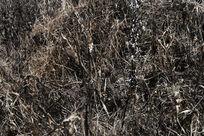 燃烧后的草丛