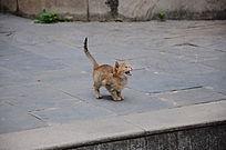 受到惊吓的幼猫仔