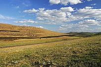 呼伦贝尔草原野花盛开