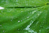 绿叶纹理背景