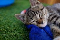 睡着的小猫