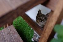 抬头的小猫