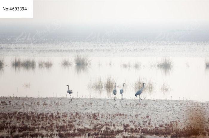 原生态湿地景色图片