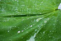 翠绿水珠背景