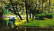 公园丛林风景