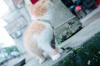 回过头的小猫