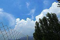 蓝天白云下的大树防护网