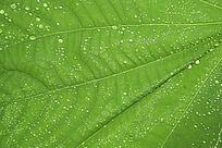 水珠绿叶背景