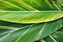 叶子肌理水珠背景