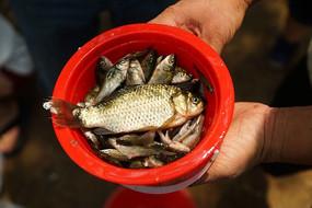 腌在水桶里的小鱼