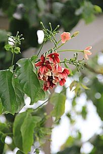 枝头上的花朵