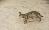漫步的小猫