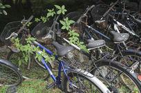 有绿色为伴的自行车