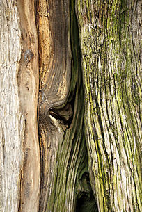 沧桑的老树干纹理背景素材