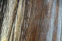 实拍树干纹理背景大图