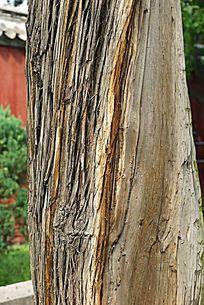 树干纹理肌理背景素材