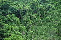 夏日太行山植被