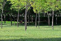 城市小树林植被景色