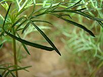 清晰的植物叶子