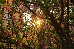 被夕阳洒落的小花