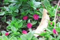 草地上盛开的小花