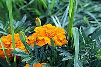鲜花绿草摄影图片