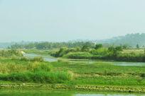 中缅边界繁盛的植被