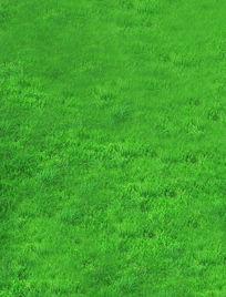 唯美清新生态绿草地高清图片