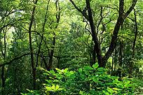 树林深处丰富的绿色植被