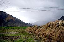 田野里的草垛